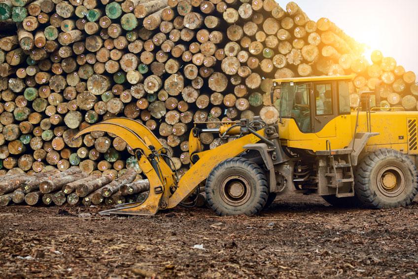 Orman Ürünleri Blog Yazısı
