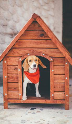 Köpek Kulübesi Acar Orman Ürünleri